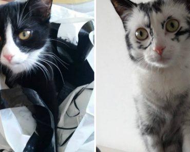 Gatinha Preta e Branca Fica Quase Toda Branca Em Apenas 1 Ano 6