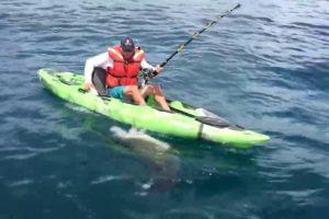 Homem Em Caiaque Vive Momento Intenso Ao Ser Perseguido Por Tubarão 10