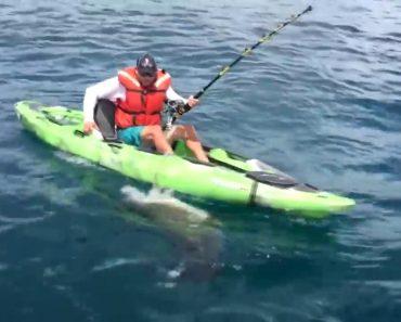 Homem Em Caiaque Vive Momento Intenso Ao Ser Perseguido Por Tubarão 1