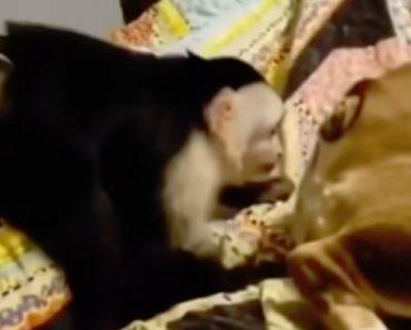 Macaco Impiedoso Enfia Dedo Dentro Do Traseiro De Cão Desprevenido 1