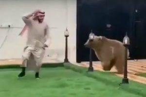 Árabe Brinca à Apanhada Com Urso 8