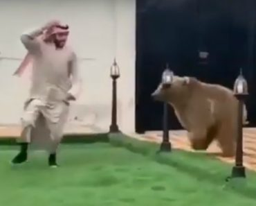 Árabe Brinca à Apanhada Com Urso 6