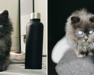 Conheça Merlin… o Gatinho Cego Que Está a Conquistar Os Internautas 1