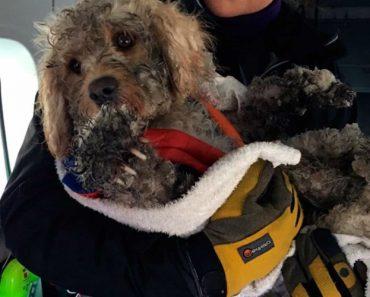 Cão Perdido Na Neve Resgatado De Helicóptero Pela Guarda Costeira 3