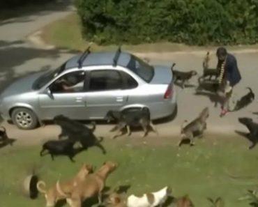 Jornalista Atacado Por Cães Durante Reportagem Em Direto Num Centro De Animais 2
