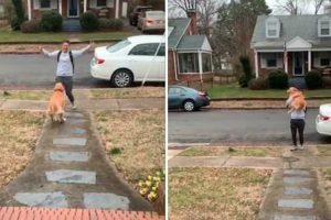 Cão Salta De Alegria Para Cima Do Dono Em Reencontro Eufórico 9