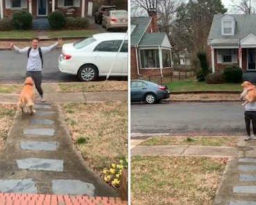 Cão Salta De Alegria Para Cima Do Dono Em Reencontro Eufórico 3