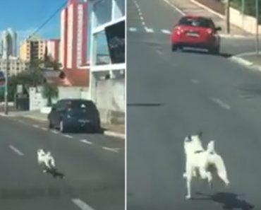 Impiedoso Dono Abandona Cão e Nem Se Arrepende Ao Vê-lo Correr Desesperadamente Atrás Do Carro 3