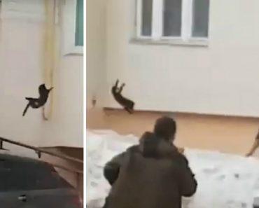 Mulher Atira Gato Para Assustar Alce 6