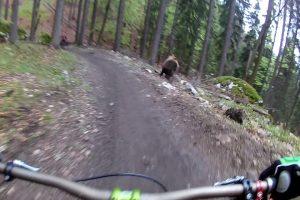 Apavorados Ciclistas Cruzam-se Com Urso Durante Descida Em BTT 10