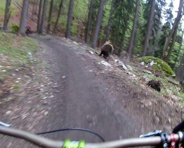 Apavorados Ciclistas Cruzam-se Com Urso Durante Descida Em BTT 1