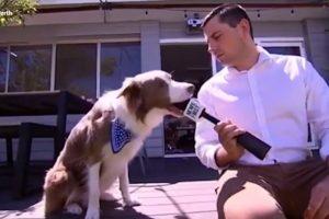 Jornalista Fica Sem Parte Do Microfone Ao Tentar Entrevistar Cão 8