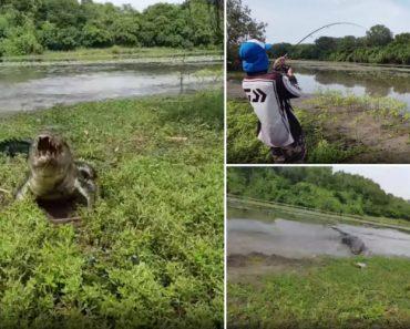 Enorme Crocodilo Rouba Peixe De Forma Inesperada a Dois Jovens Na Austrália 3