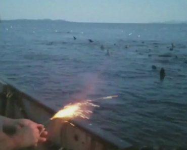 Pescador Atira Explosivo Contra Grupo De Leões Marinhos e Cria Revolta Nas Redes Sociais 9