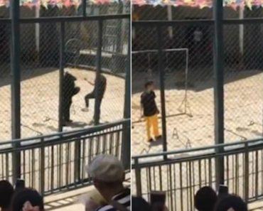 Cruel Treinador Pontapeia Urso De Circo Durante Atuação 2