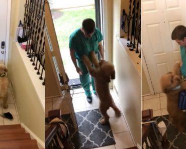 A Alegria De Um Cão Sempre Que o Dono Volta De Um Longo Dia De Trabalho 6