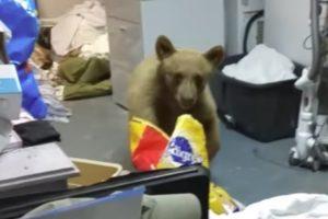 Mulher Tenta Afugentar Urso Da Sua Garagem Usando Garrafa De Spray Com Água 9