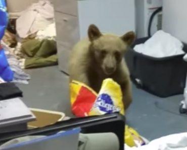 Mulher Tenta Afugentar Urso Da Sua Garagem Usando Garrafa De Spray Com Água 8