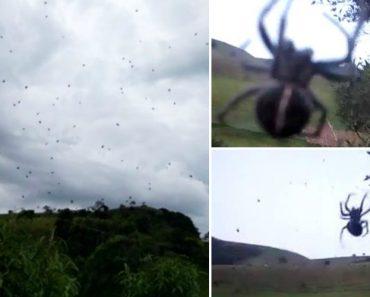 """Jovem Filma Fenómeno Conhecido Como """"Chuva De Aranhas"""" 1"""