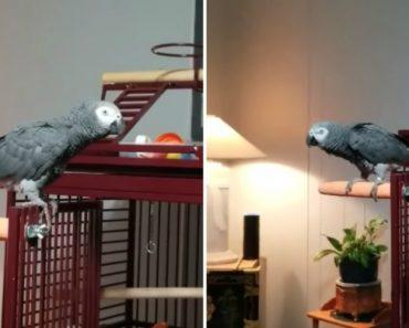 """Papagaio Que Odeia Música Pede à """"Alexa"""" Que Pare De Tocar Para Não Ser Incomodado 9"""