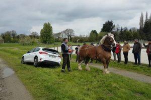 Cavalo Retira Carro De Uma Vala Em Poucos Segundos 10