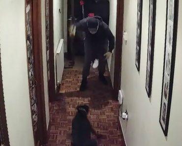Assaltantes Armados Fogem De Cão Ao Tentarem Arrombar Porta De Habitação 4