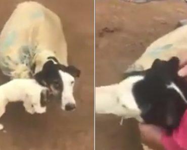 Cadela é Encontrada Com Filhotes Fechados Dentro De Saco Para Morrerem 4