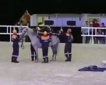 Cavalo Desespera Durante Demonstração De Resgate 14