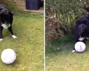 """Este """"Cão Futebolista"""" Está a Fazer Furor Nas Redes Sociais Com Este Video 7"""