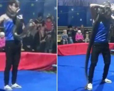 Encantador De Cobras é Sufocado Em Segundos Por Piton Durante Atuação De Circo 5
