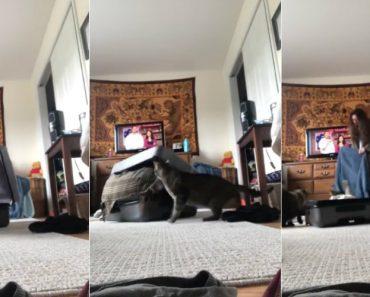Mulher Esconde-se Dentro De Mala e é Fortemente Atacada Pelo Seu Gato 1