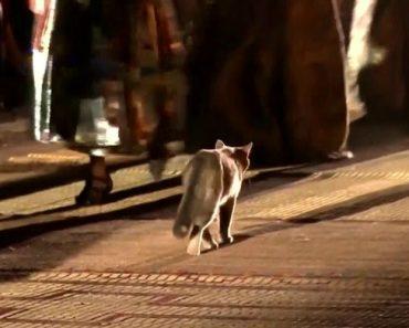 Gato Infiltrou-se Num Desfile Da Dior Em Marraquexe 5