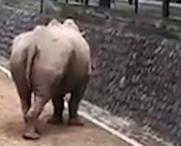 Mulher Salta Para Jaula De Rinocerontes Para Apanhar Telemóvel 6