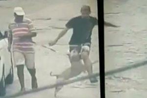 Sem Saber, Pitbull Ajuda Polícia a Capturar Criminoso 8