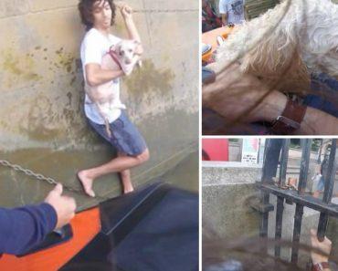 Jovem Salta Para o Rio Para Salvar Cão e Acaba Por Ter Que Ser Resgatado 9