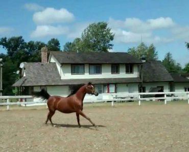 Cavalo Usa Técnica Invulgar Para Sair Do Picadeiro 7