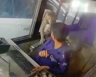 Macaco Rouba Dinheiro Após Invadir Portagem 1