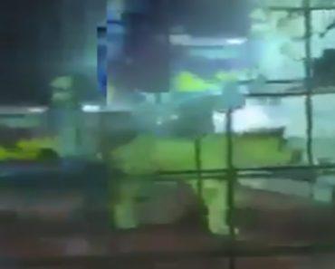 Menina Atacada Por Leão Após Levarem-na Para Jaula Repleta De Crianças Para Brincarem Com o Felino 2