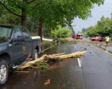 Relâmpago Atira Árvore Para a Estrada e Provoca Colisão 3