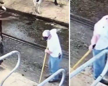 Agricultor é Atingido Com As Fezes Projetadas Por Vaca 5