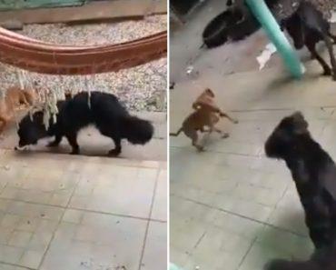 Dona Fica Contente Ao Ver Que Os Seus Cães Caçaram Um Rato, Mas Não Por Muito Tempo 1