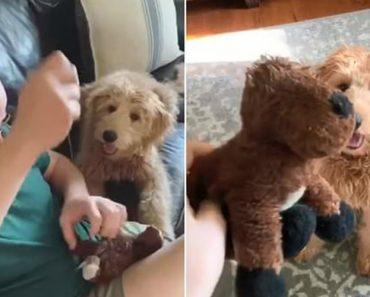 """Cão Espera Ansioso Pelo Melhor Amigo """"Submetido a Uma Cirurgia"""" 1"""