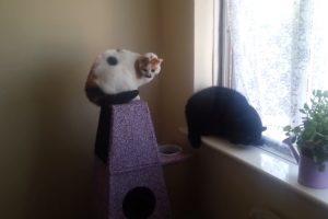 Dono Disfarçado De Cão Assusta Os Seus Dois Gatos 9