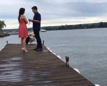 Momento Romântico Entre Casal É Interrompido Por Involuntário Mergulho De Fotógrafa 3