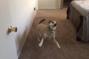 """Quando Um Cão Aprende o Significado De """"Queres Ir…"""" 14"""