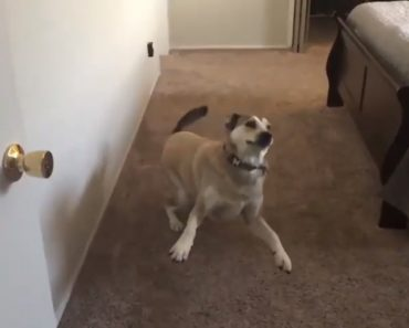 """Quando Um Cão Aprende o Significado De """"Queres Ir…"""" 8"""