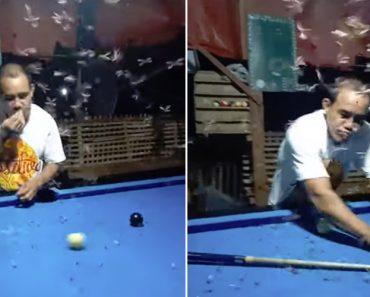 Jogador Mantém Mesa De Snooker Livre De Insetos Ao Comê-los 4