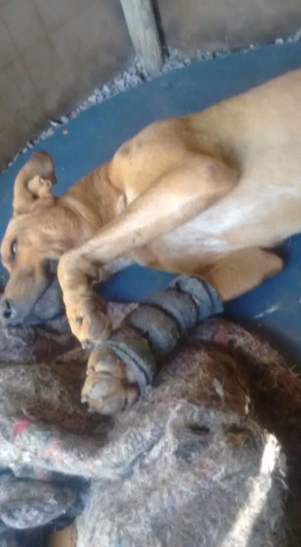 Cão Fica Pendurado Durante Salto de Parapente Após Morder a Mochila Do Praticante 1