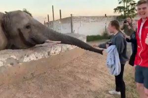 """Elefante Irrita-se Ao Ver Que Mulher Está a Querer Fotografá-lo e Dá-lhe """"Bofetada"""" Com a Tromba 9"""