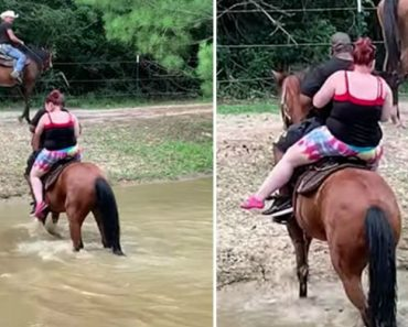 Cavalo Vinga-se De Humanos Que o Obrigaram a Atravessar o Rio 5